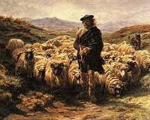 pastor sheep 1